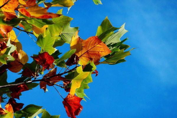 Unser Herbstferienprogramm